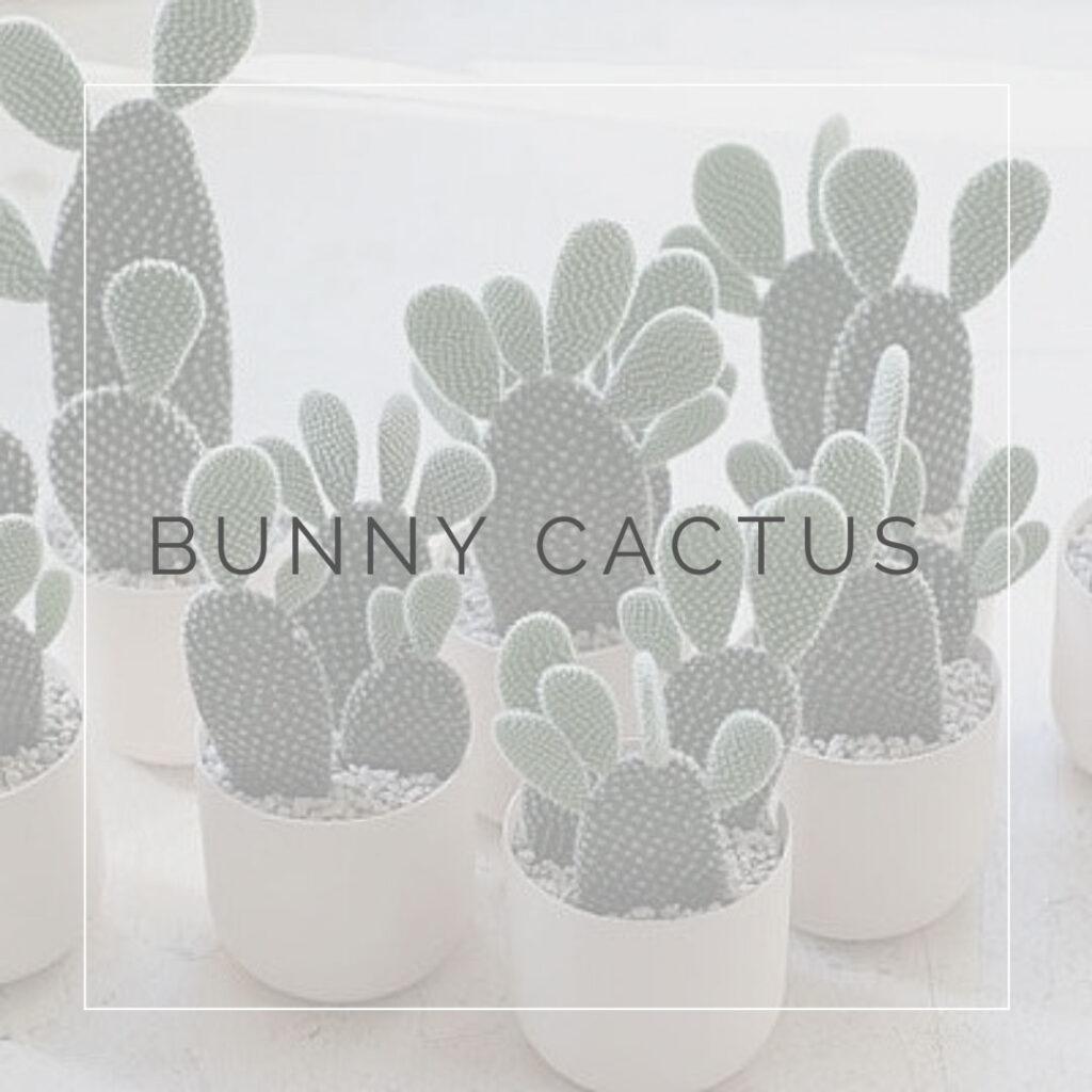 07. OPUNTIA - PLANT FOCUS