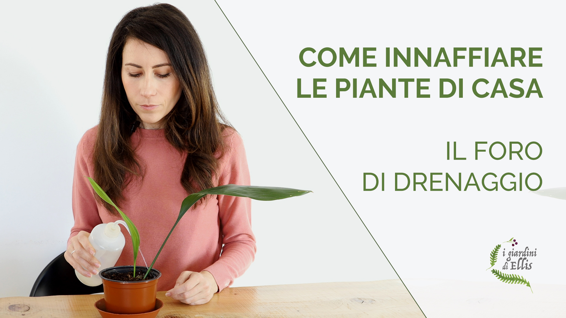 Come annaffiare le piante di casa