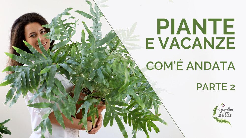 Innaffiare le piante in vacanza