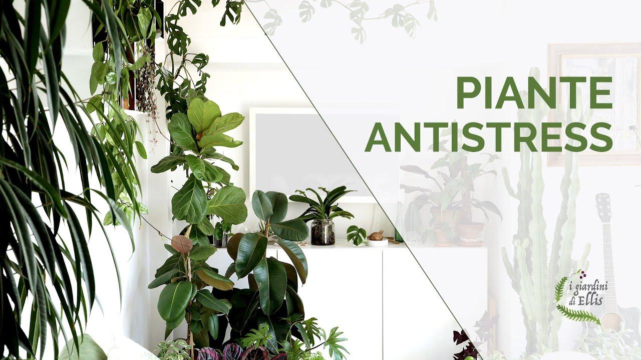 I benefici delle piante - Antistress