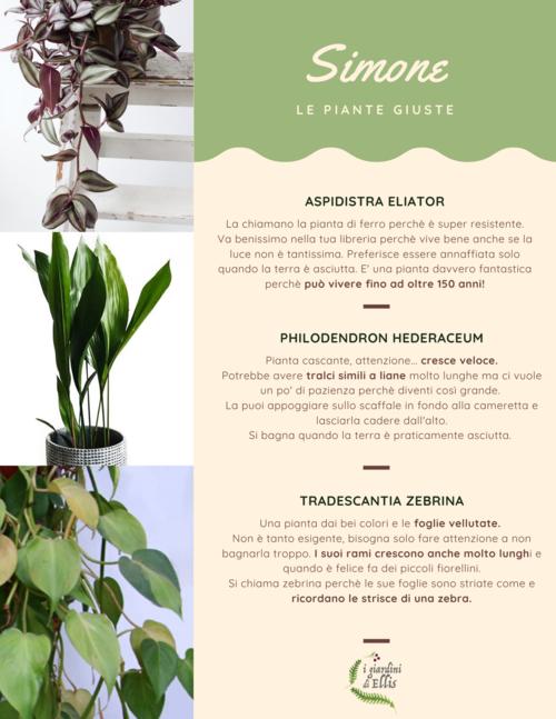 Consulenza Online - Plant Design - I Giardini di Ellis1