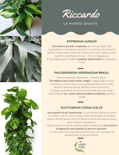 Consulenza Online - Plant Design - I Giardini di Ellis