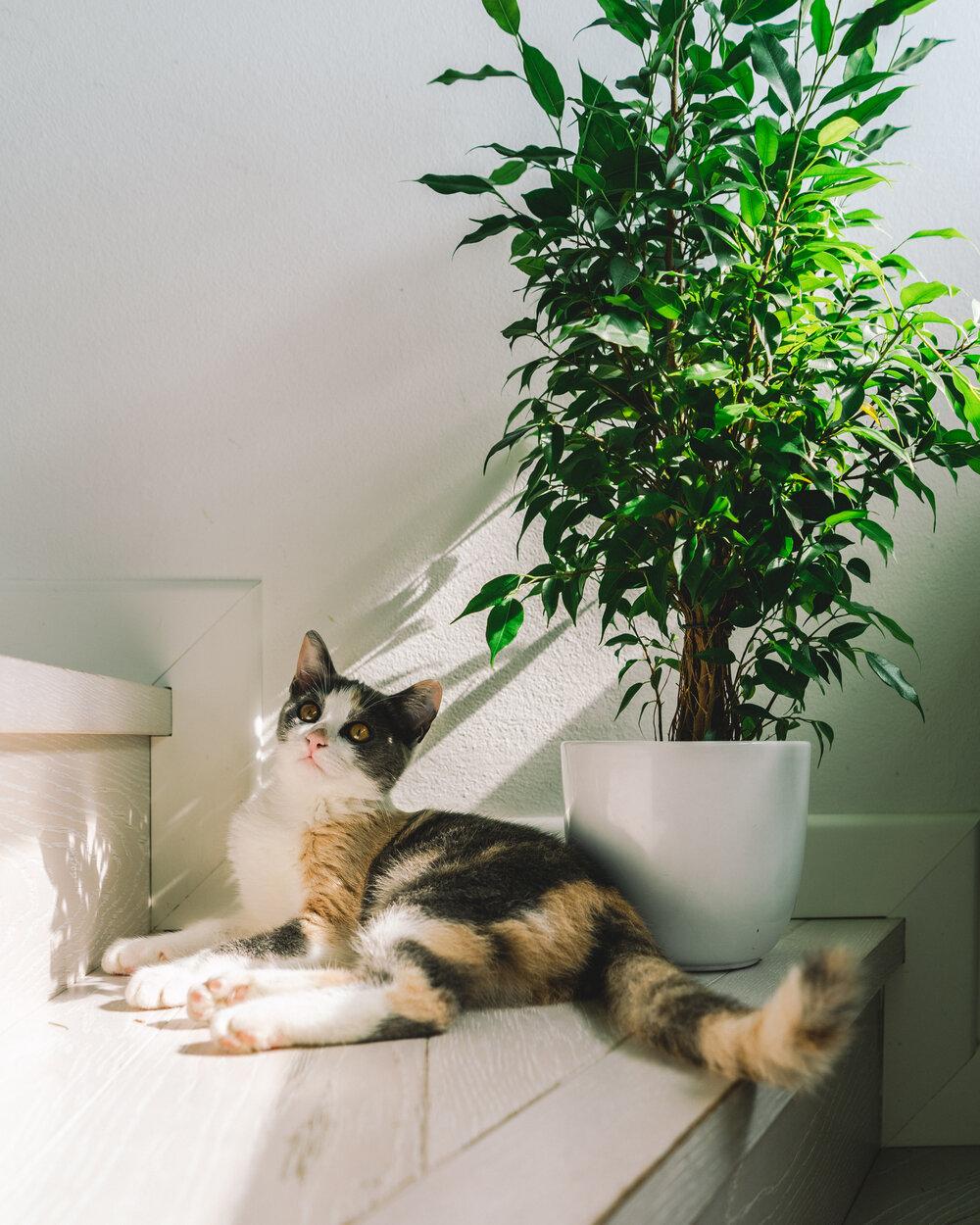 Regole del Plant Shopping - I Giardini di Ellis