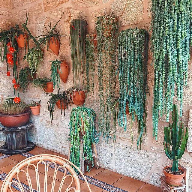 Sedum Morganianum - I Giardini di Ellis
