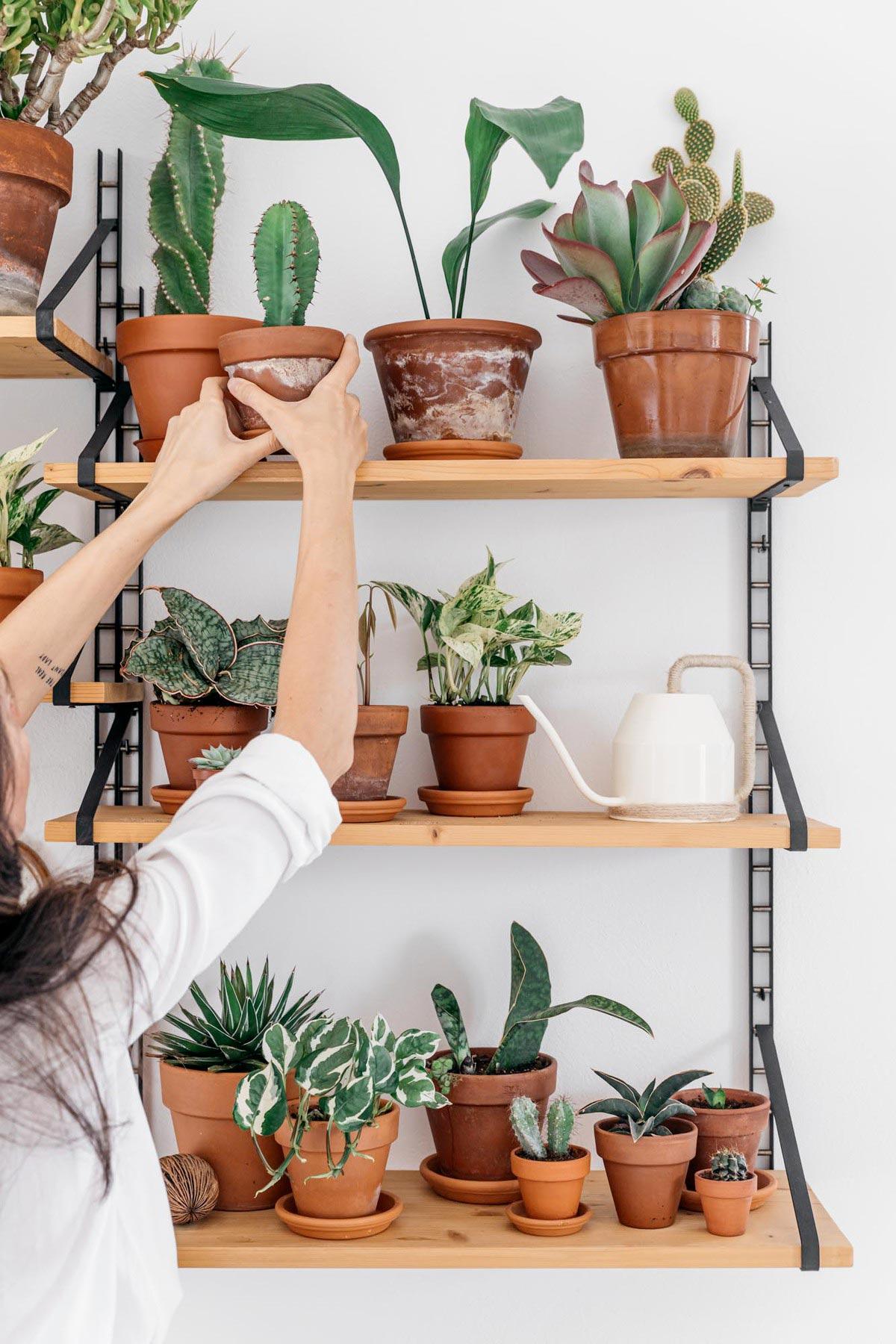 Consulenza di plant design per la tua casa a domicilio