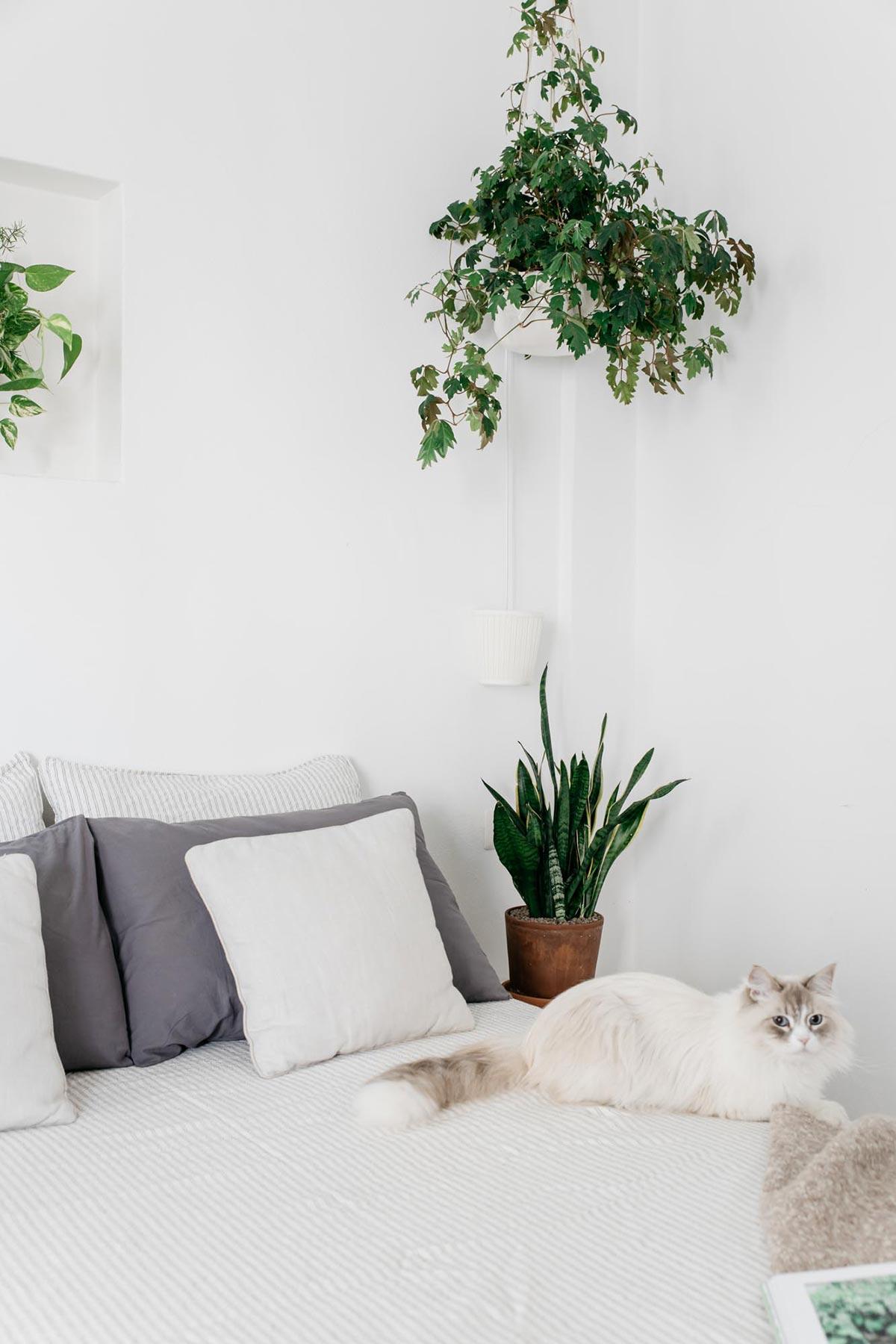 Consulenza di plant design online