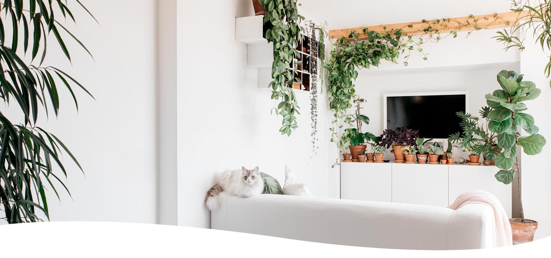 Consulenze di plant design progettazione spazi verdi di interni