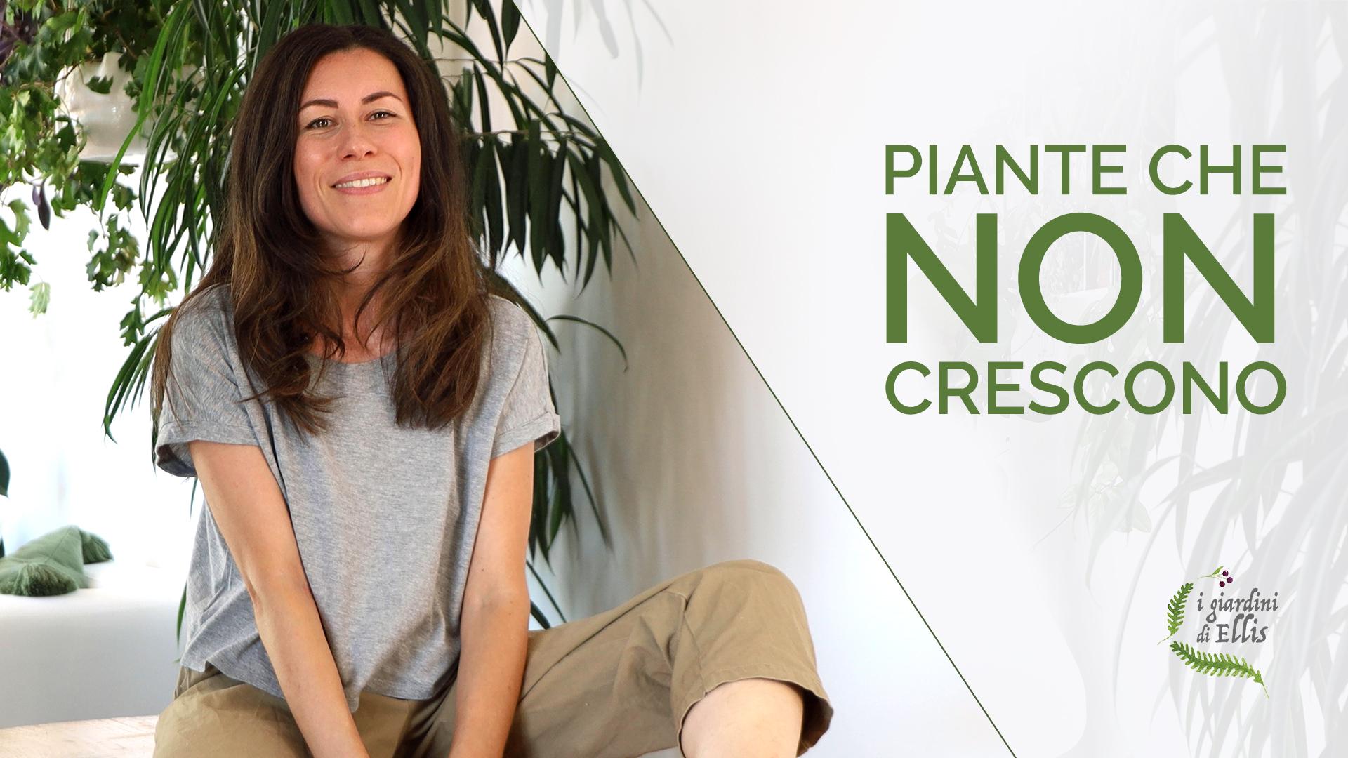 perché le piante non crescono