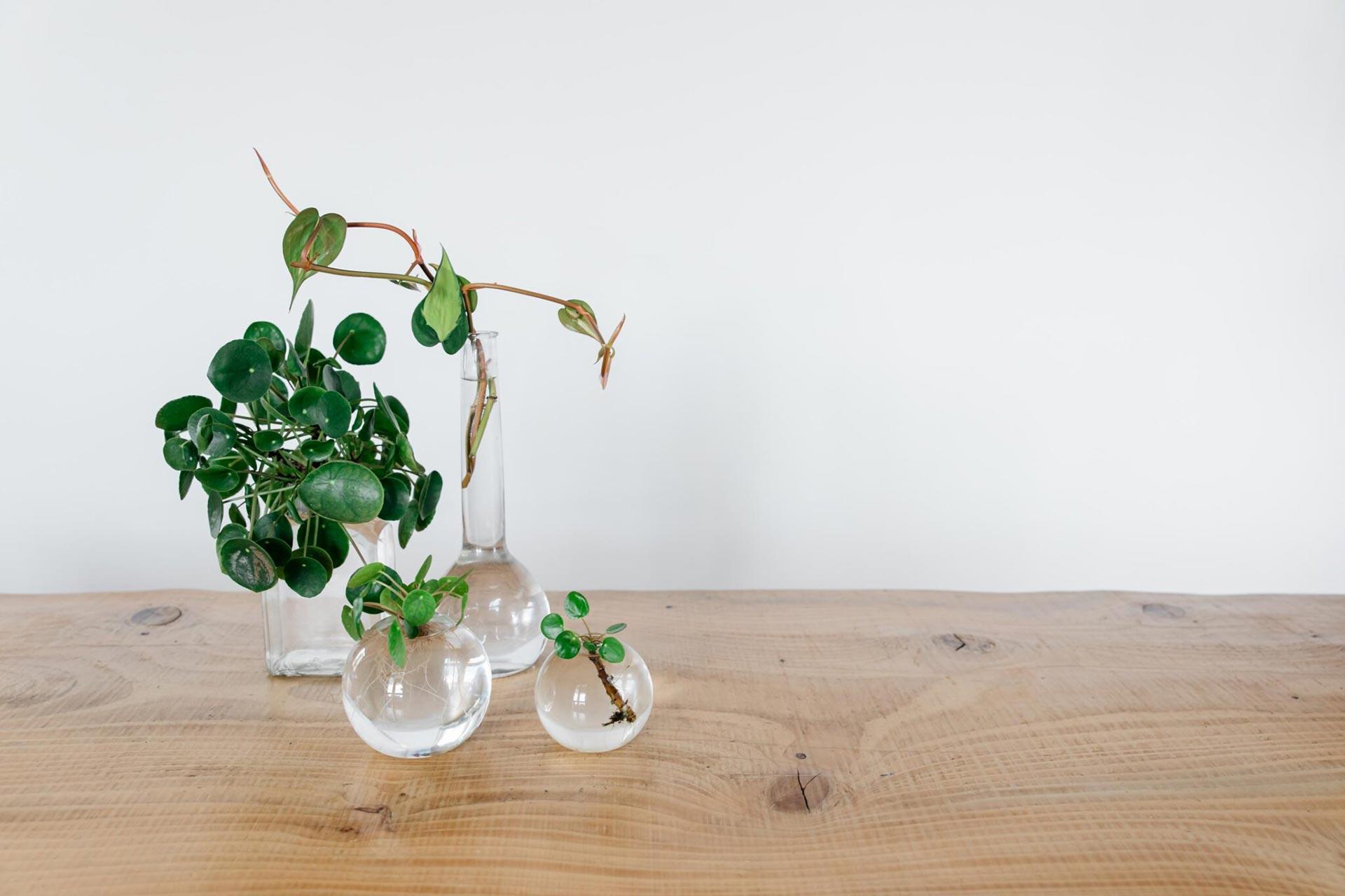 Videocorso idrocoltura piante in acqua