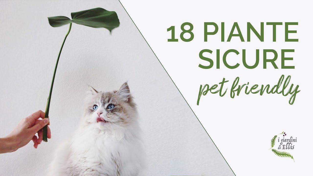 gatti piante non velenose