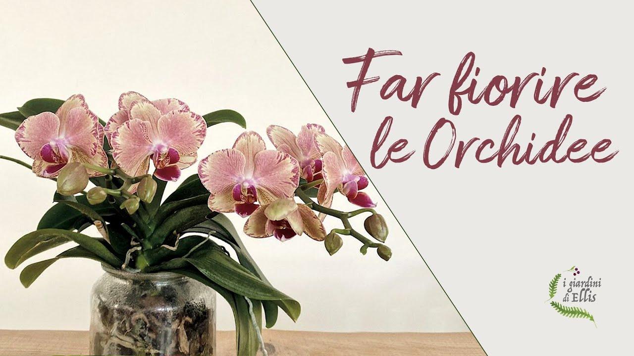 Come far rifiorire le orchidee_I Giardini di Ellis