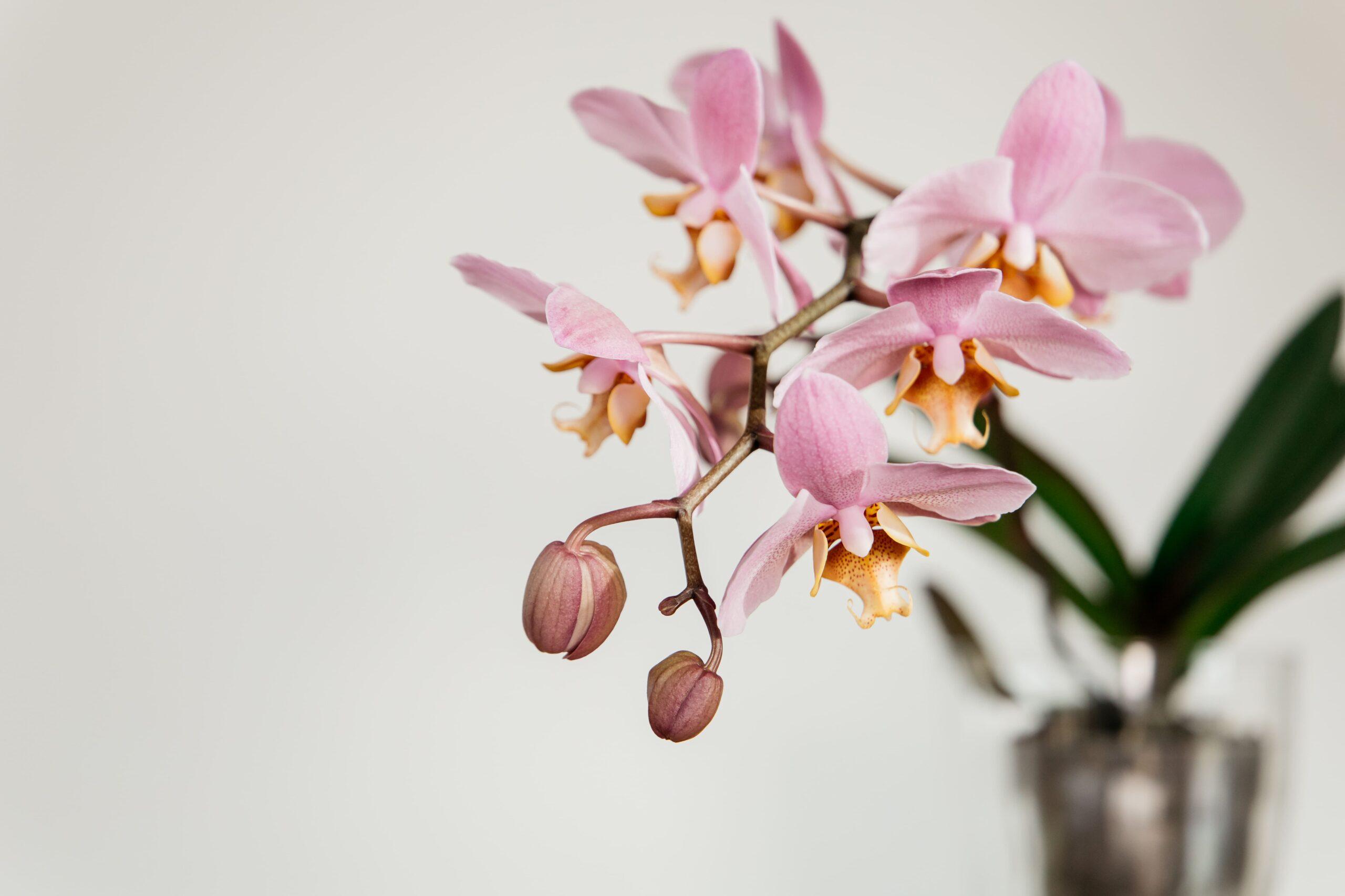 Videocorso Orchidee_I Giardini di Ellis