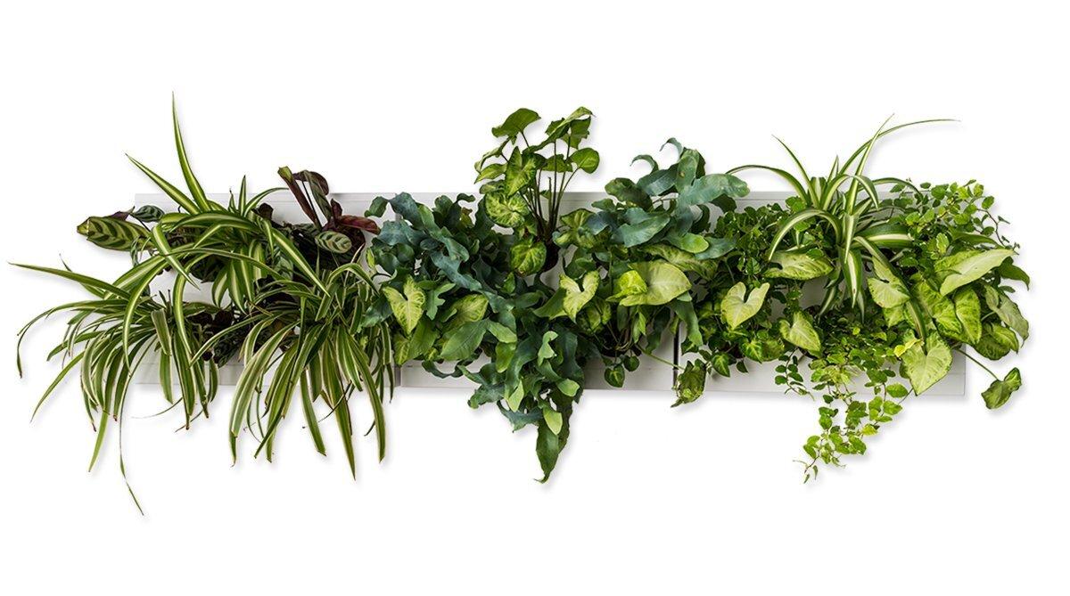 Ortisgreen verde verticale