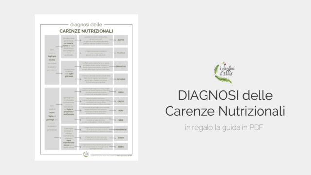 CARENZE NUTRIZIONALI_I Giardini di Ellis_PDF
