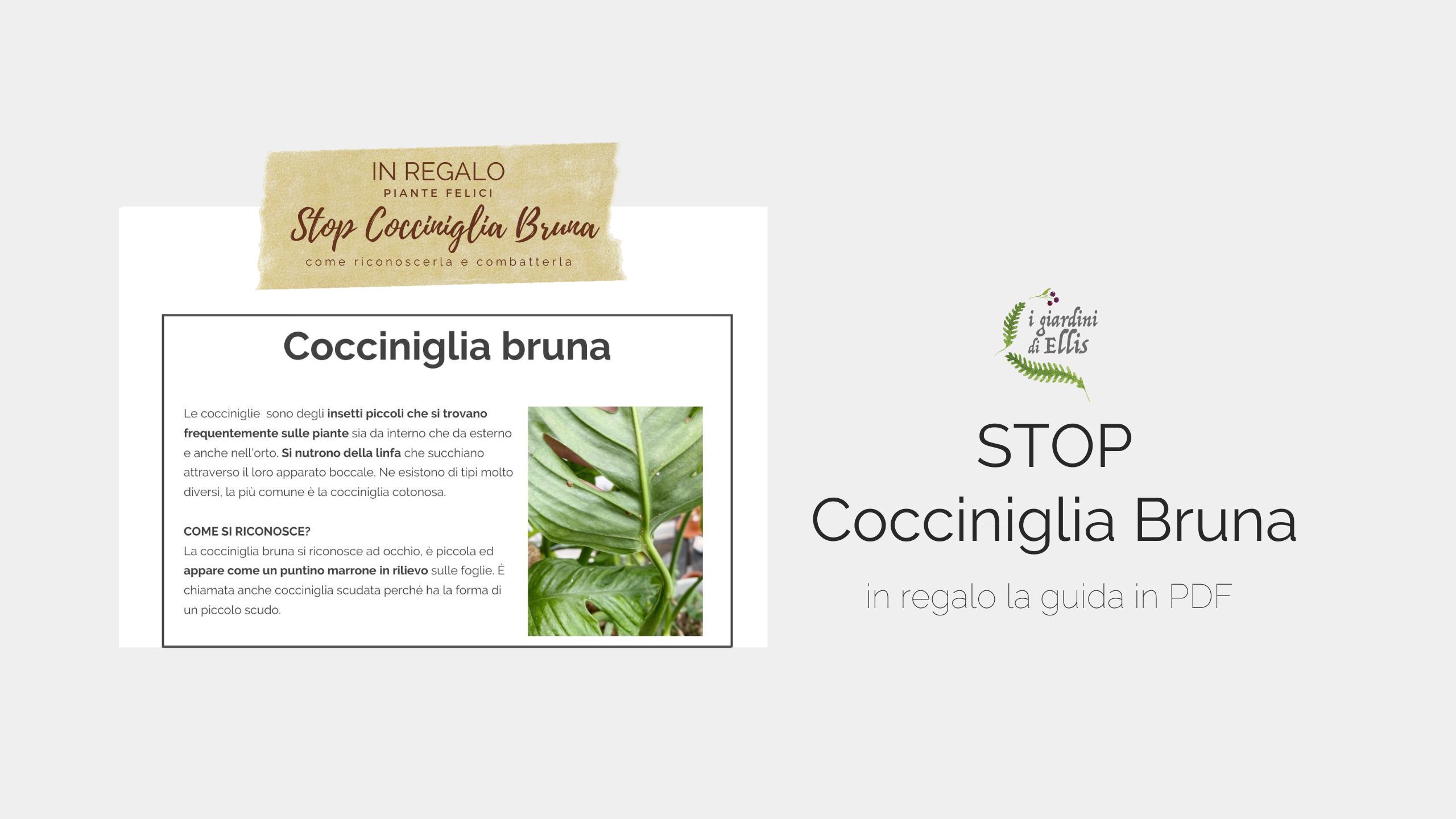 COCCINIGLIA BRUNA_I Giardini di Ellis_PDF